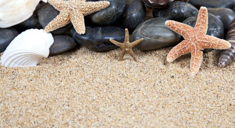 раковины моря пляжа славные песочные стоковые фотографии rf