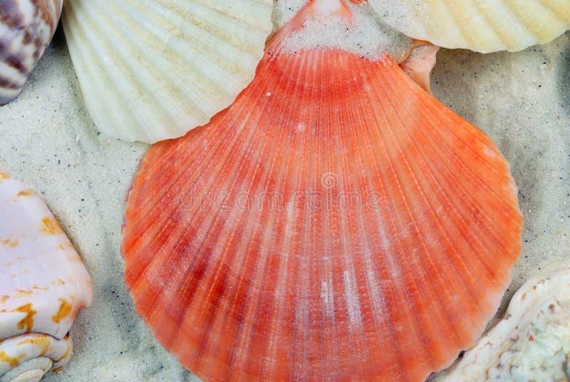 раковины моря пляжа стоковое изображение rf