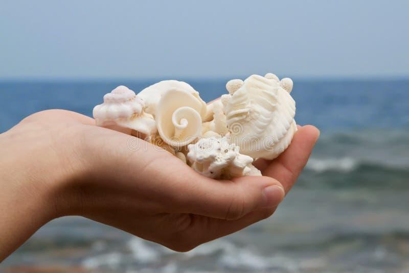 раковины моря пригорошни стоковое изображение rf
