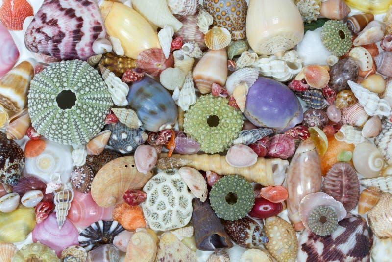 Раковины моря собрали на свободном полете Costa Rica стоковая фотография rf