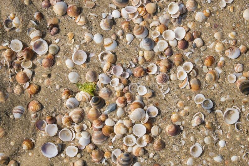 Раковины моря Средиземного моря стоковое изображение