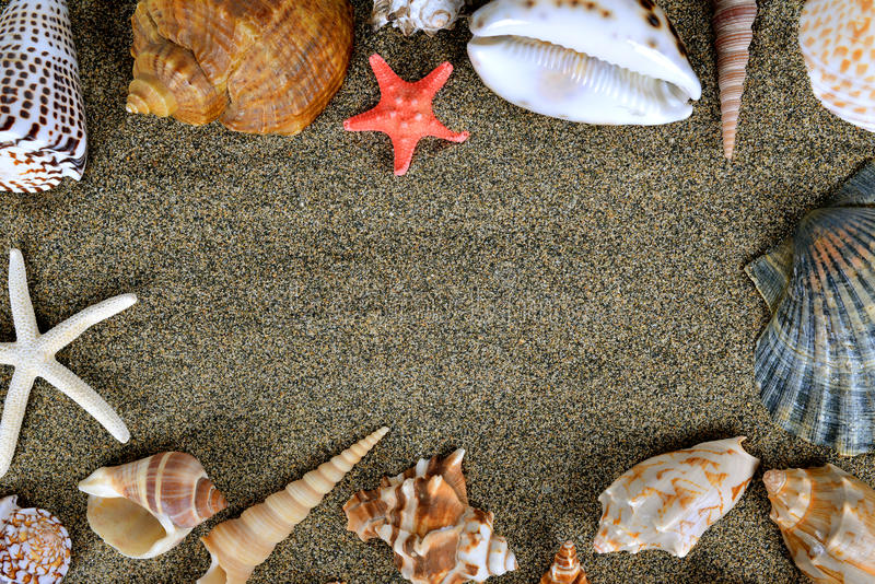 Раковины моря с песком стоковое изображение rf