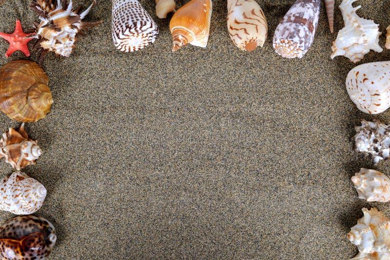 Раковины моря с песком стоковое фото rf