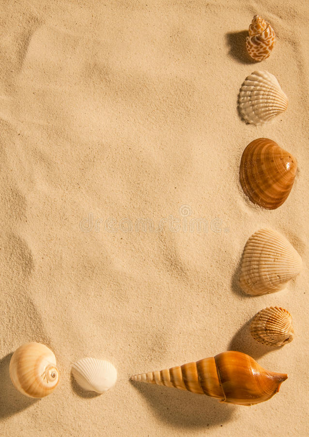 Раковины на песке стоковое изображение