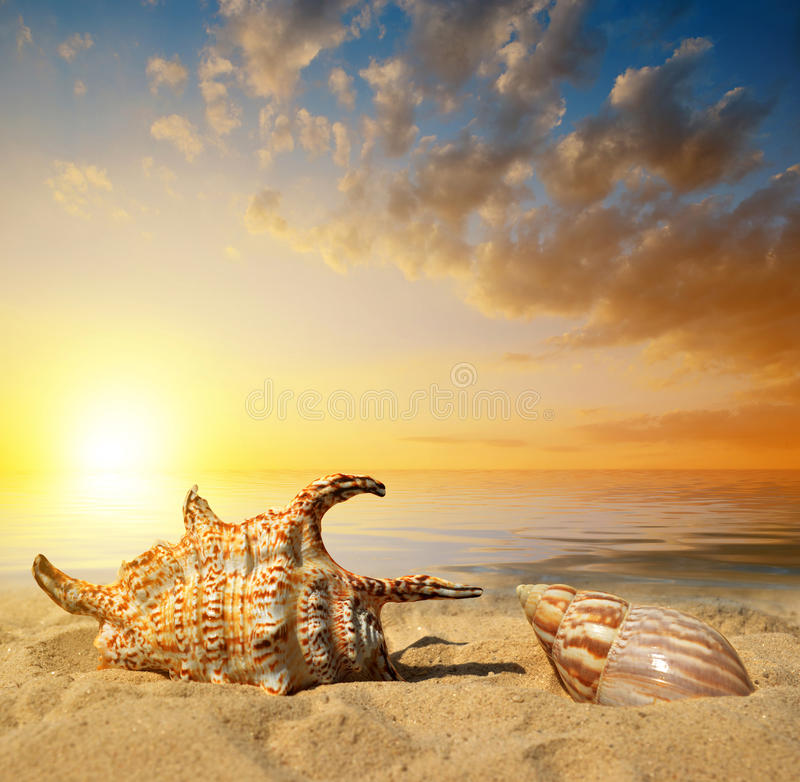 Раковины на пляже стоковая фотография rf