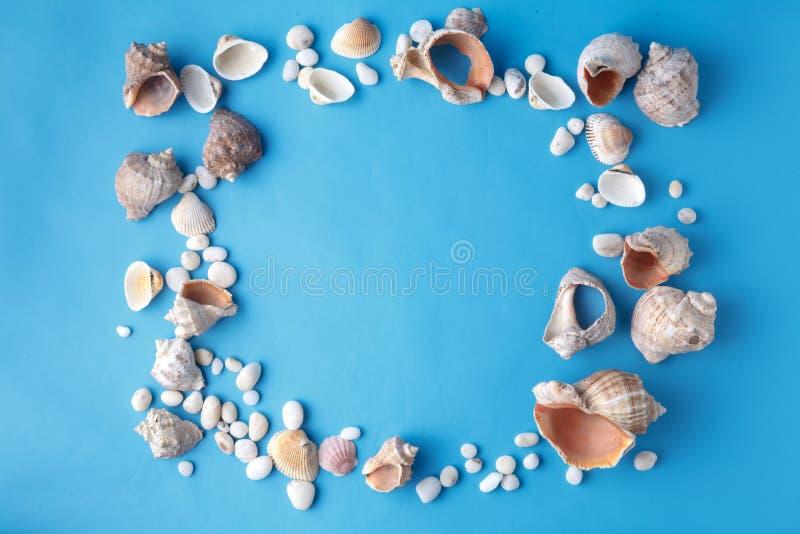 Раковины на сини, концепция моря vacaton на простой предпосылке стоковое фото rf