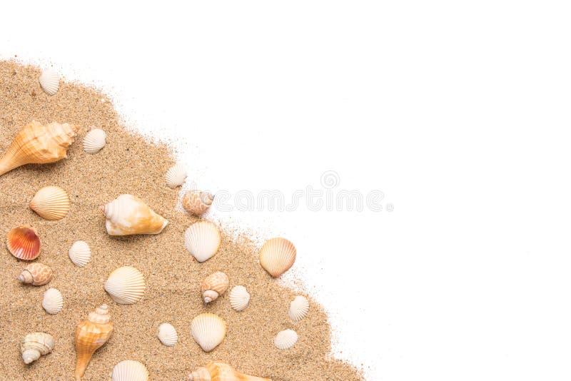Раковины песка и моря приставают тематическую предпосылку к берегу с космосом экземпляра стоковое изображение
