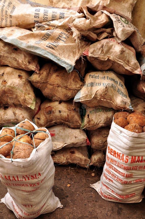 Раковины 2 кокоса стоковые фотографии rf