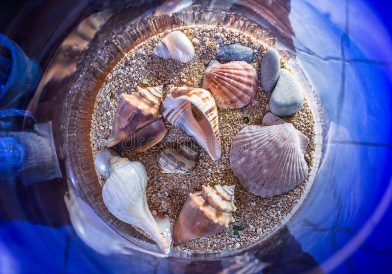 Download раковины стоковое фото. изображение насчитывающей море - 81813192