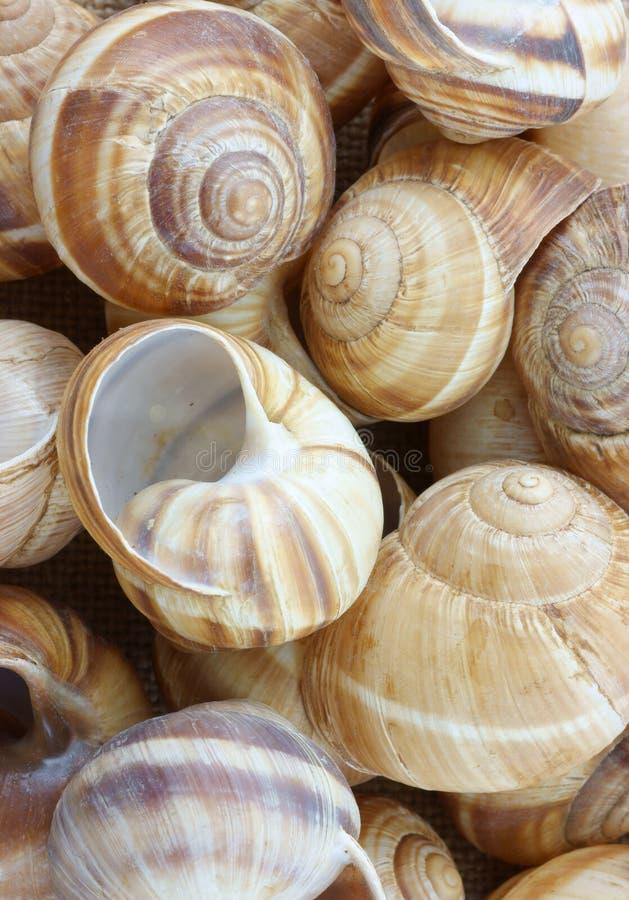 раковины escargot стоковые фотографии rf