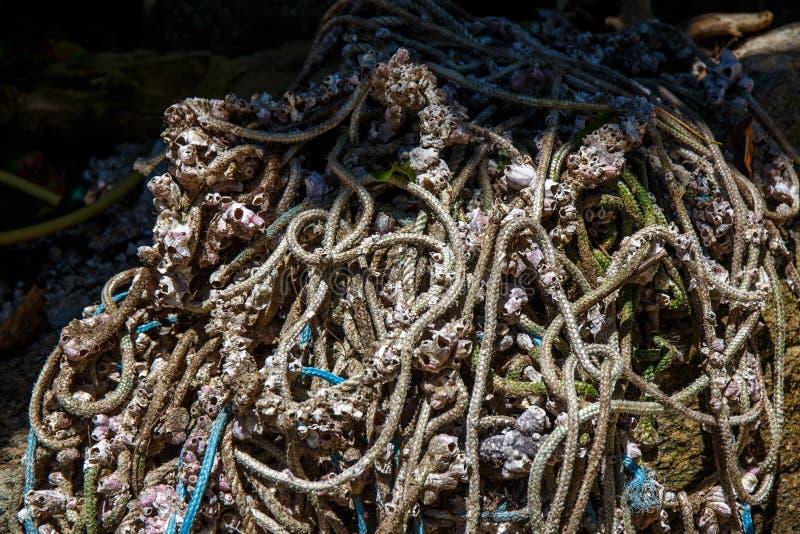 Раковины Scallop рыболовов, принятые от океана, в могущественное солнце стоковая фотография