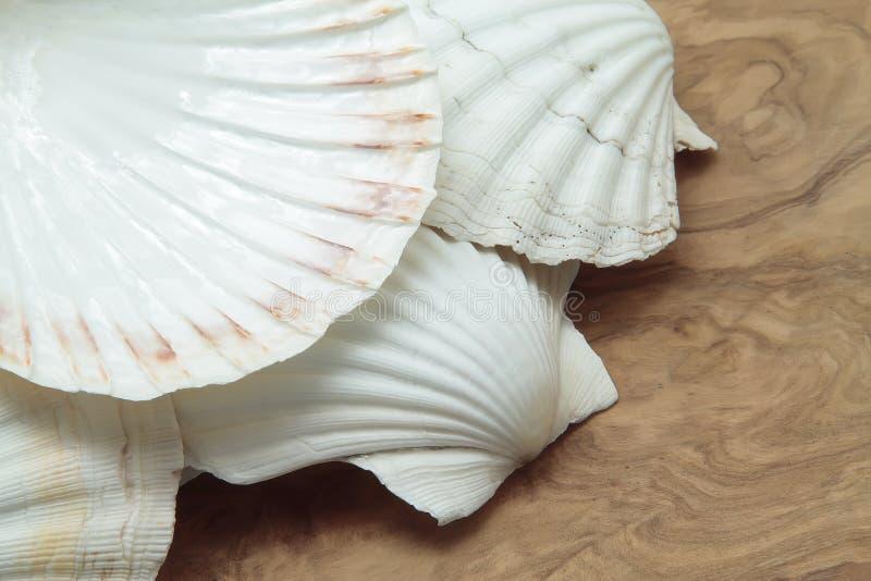 Раковины Scallop стоковое фото rf