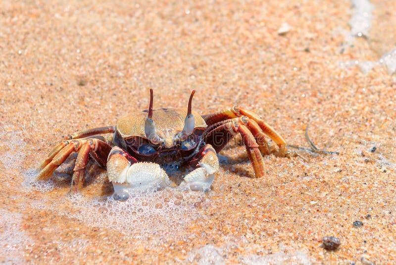 Рак на пляже стоковое изображение