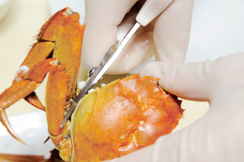 рак стоковое изображение