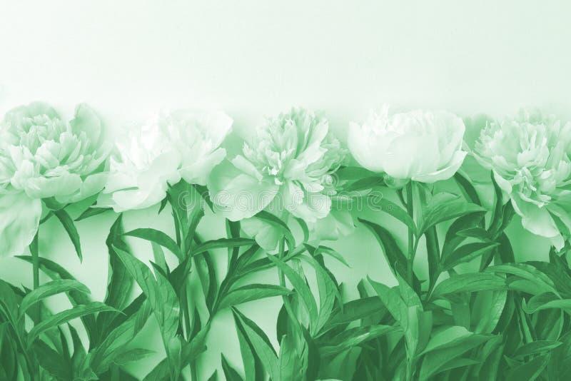 Рама цветов на белом деревянном фоне Сезонный праздничный роман, святой валентин, 8 марш торжества, вид с космическим пространств стоковая фотография rf
