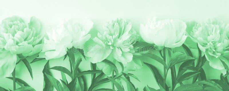 Рама цветов на белом деревянном фоне Сезонный праздничный роман, святой валентин, 8 марш торжества, вид с космическим пространств стоковое изображение