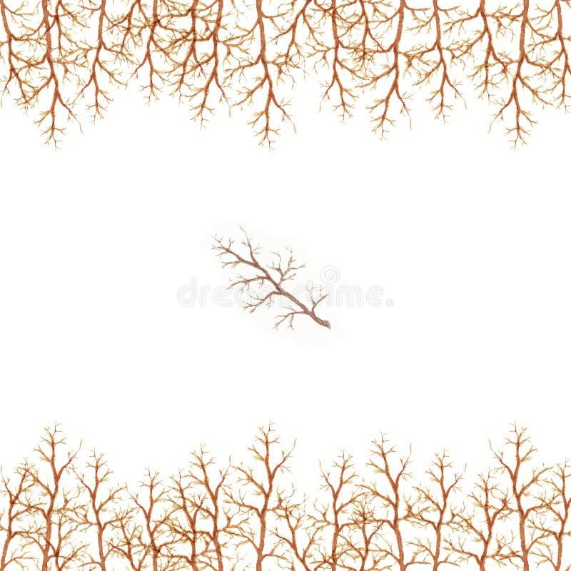 Рамка акварели ветвей дерева при коричневая картина границы светлого цвета изолированная на белой предпосылке бесплатная иллюстрация