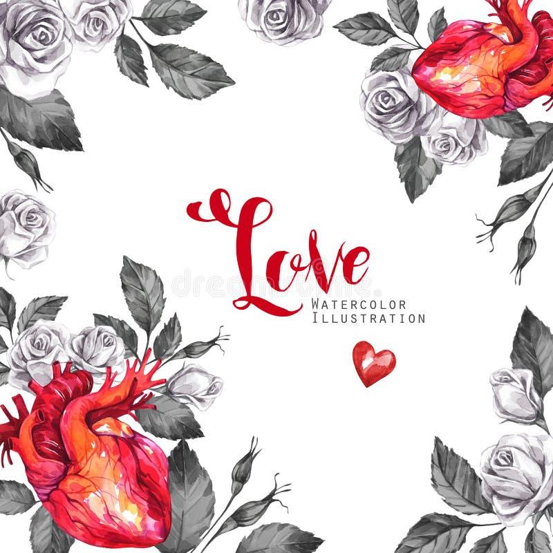 Рамка акварели квадратная, анатомические сердца с эскизами роз и листья в винтажном средневековом стиле красный цвет поднял иллюстрация вектора