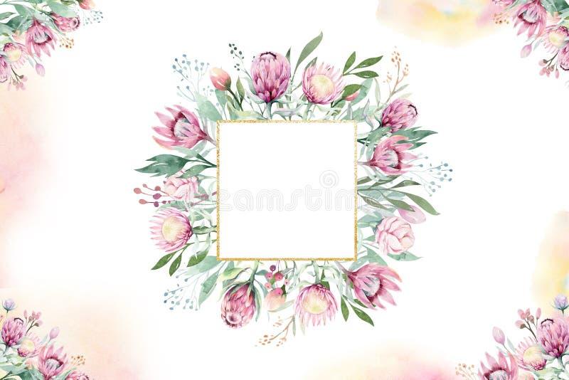 Рамка акварели руки изолированная чертежом флористическая с protea подняла, листья, ветви и цветки Богемский кристалл золота иллюстрация вектора
