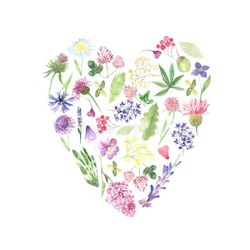 Рамка акварели с розовыми полевыми цветками иллюстрация вектора