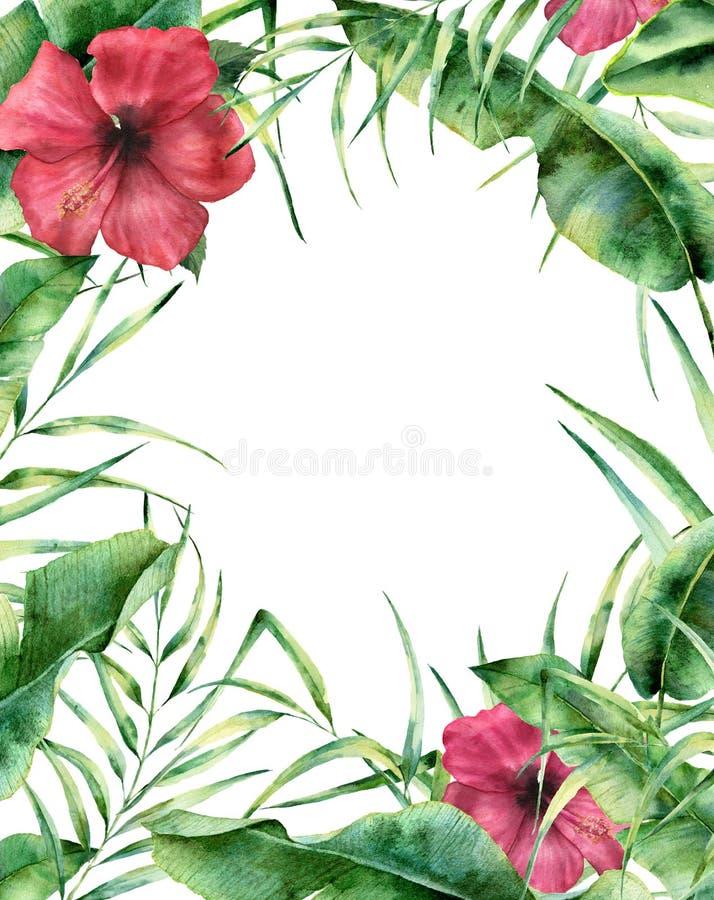 Рамка акварели экзотическая флористическая Граница покрашенная рукой флористическая с листьями пальмы, ветвью банана и гибискусом иллюстрация штока