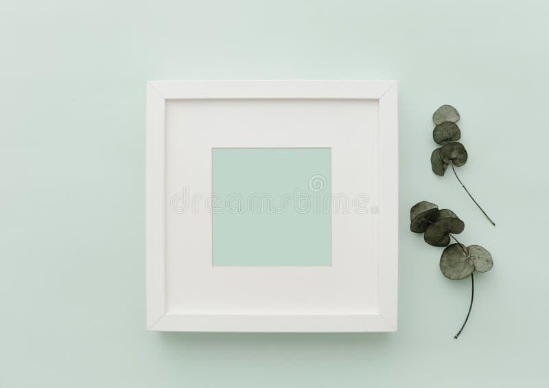 Рамка белизны модель-макета Нейтральная минималистская сцена положения квартиры с кактусом стоковое фото rf