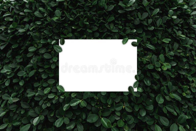 Рамка белой бумаги на зеленом цвете выходит предпосылка стоковое изображение rf