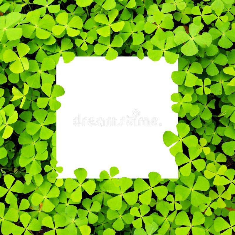 Рамка белой бумаги на зеленых листьях стоковая фотография rf