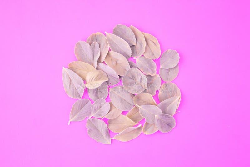 Рамка венка сделанная из изолированных листьев на розовой пастельной  стоковое изображение rf
