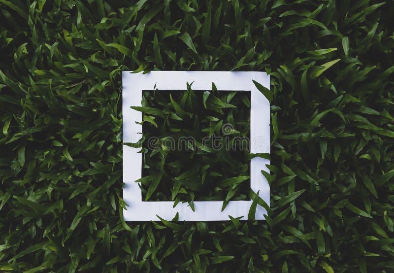 Рамка взгляда сверху белая на темных ых-зелен листьях травы стоковые фото