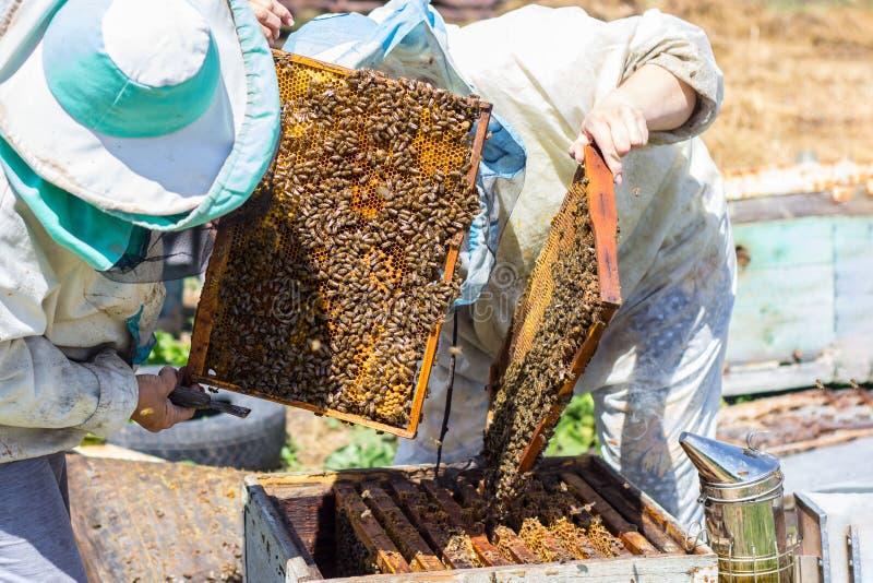 Рамка взятия Beekeepers honye от улья стоковое изображение rf