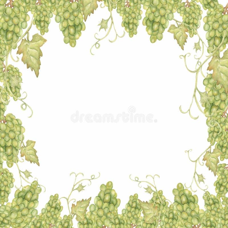 Рамка виноградин красивой руки акварели вычерченная в зеленом цвете иллюстрация вектора
