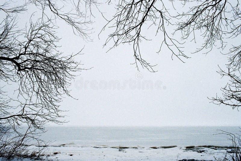 Рамка деревьев стоковые фотографии rf