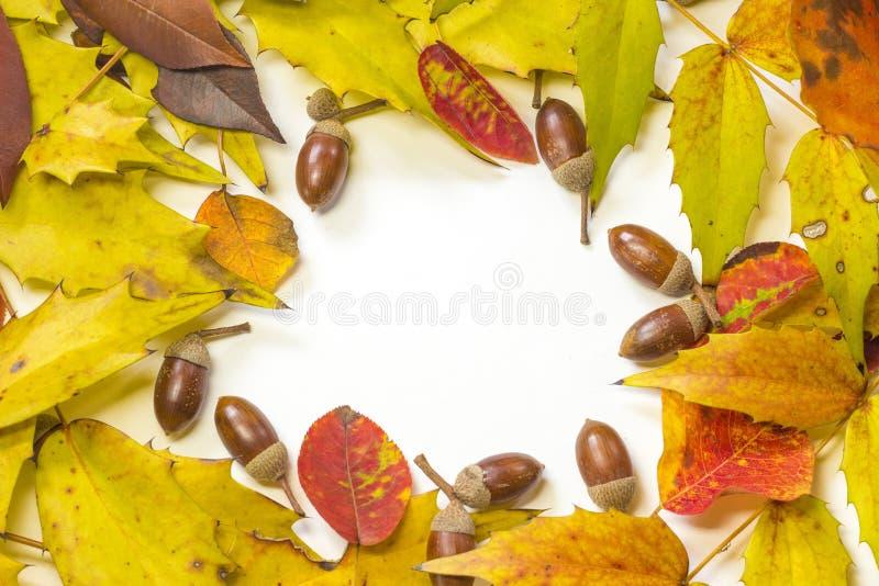 Рамка жолудя и лист осени в круге стоковые фотографии rf