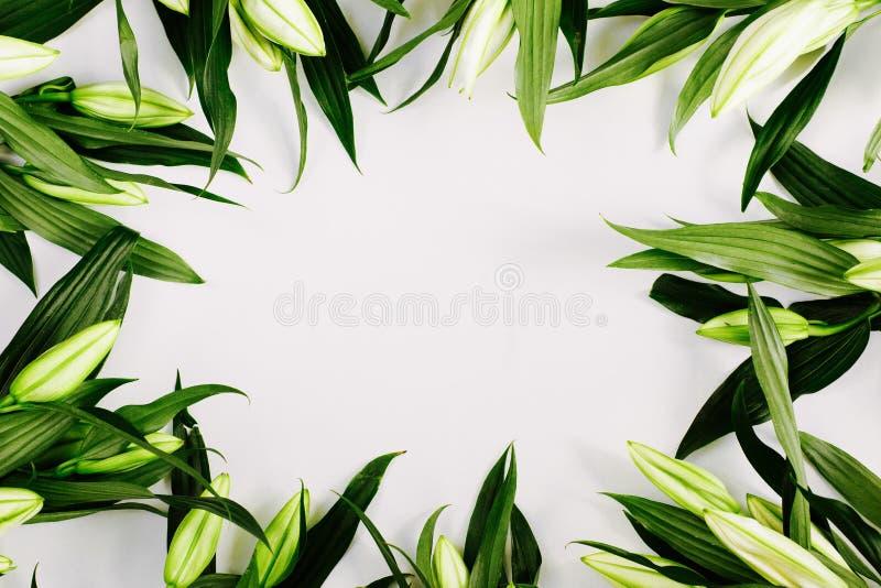 рамка зеленых лилий на белом фоне Плоская квартира, вид сверху, копировальное пространство стоковые изображения rf