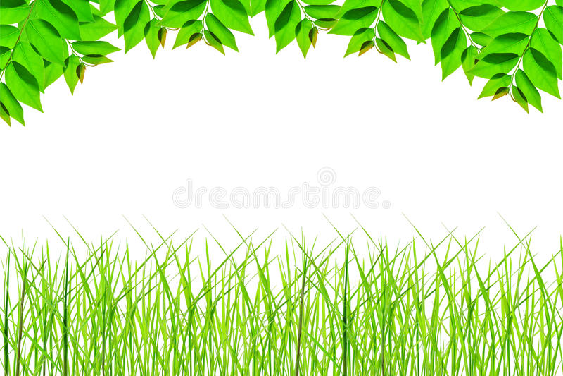 Рамка зеленого цвета нации стоковая фотография rf