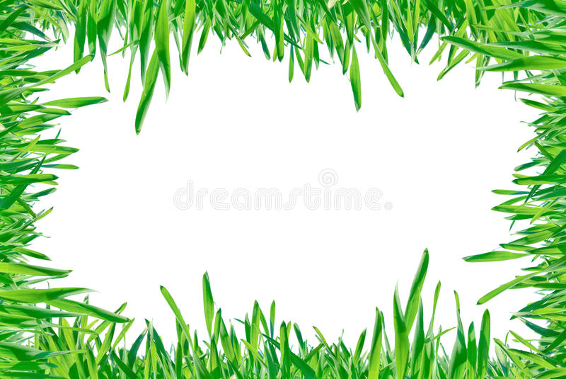 Рамка зеленой травы изолированная на белой предпосылке. стоковое фото