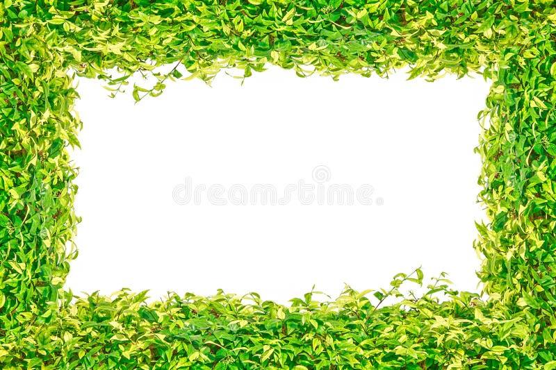 Рамка зеленой травы изолированная для предпосылки стоковые изображения