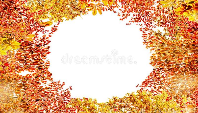 Рамка листвы осени, изолированная на белой предпосылке Различные красочные листья падения стоковая фотография