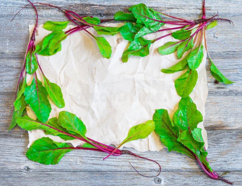 Рамка листьев бураков стоковая фотография