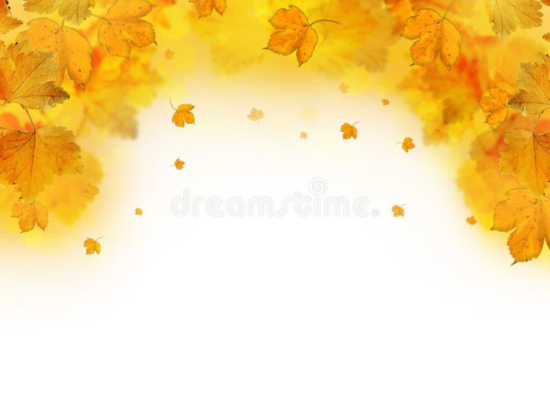 Рамка листьев осени падая бесплатная иллюстрация