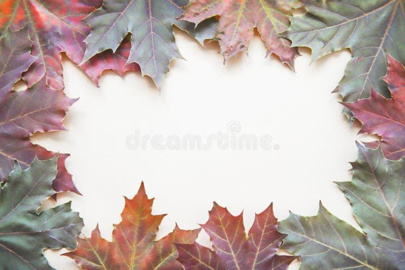 Рамка кленовых листов осени E стоковая фотография