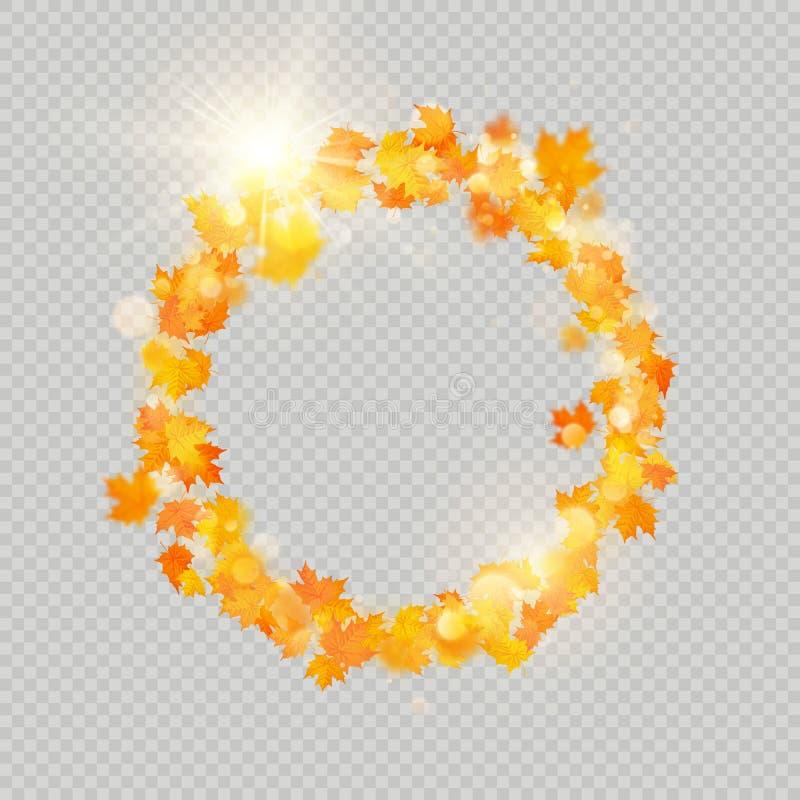 Рамка кленовых листов падения с чувствительным солнцем для украшения Шаблон границы листьев осени вектор изображения иллюстрации  иллюстрация штока