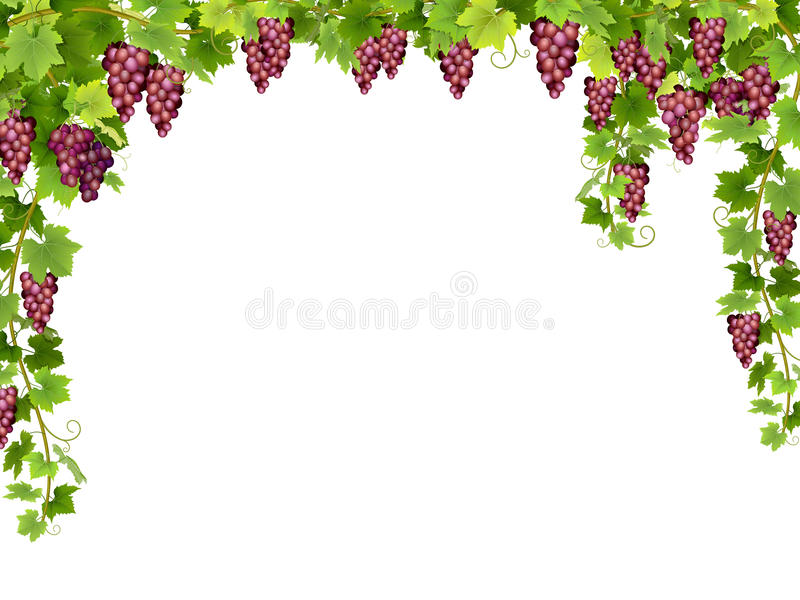 Рамка красной виноградины флористическая иллюстрация штока