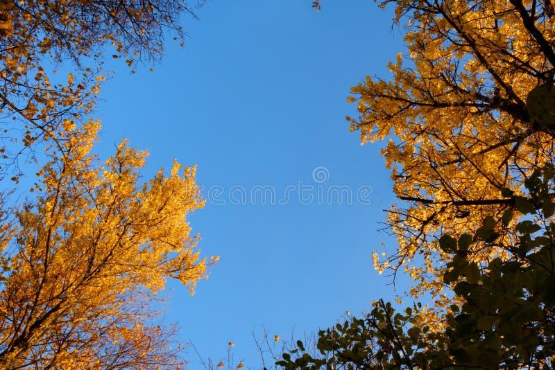 Рамка красочных листьев осени против голубого неба стоковое изображение