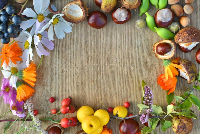 Рамка осени сделанная цветков, плодоовощей и гаек стоковые фото