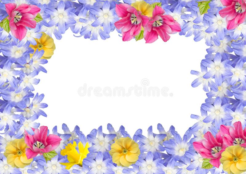 Рамка, открытка изолированных цветков весны бесплатная иллюстрация