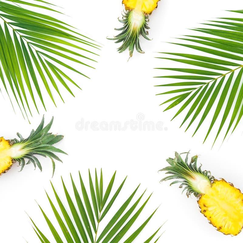 Рамка отрезанных листьев ананаса и ладони изолированных на белой предпосылке Плоское положение, взгляд сверху стоковая фотография rf