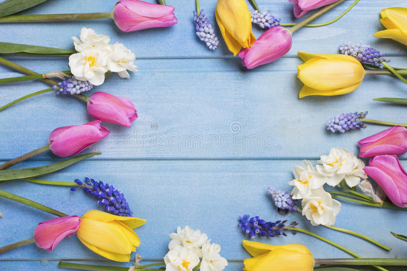 Рамка от розовых, желтых тюльпанов и белых daffodils цветет стоковое фото rf