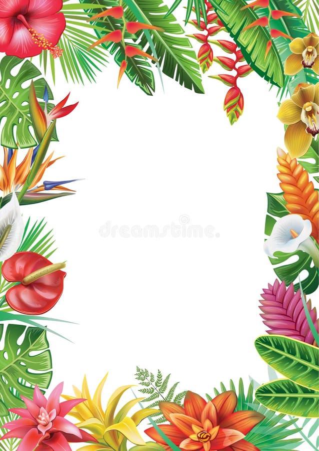 Рамка от тропических заводов иллюстрация вектора